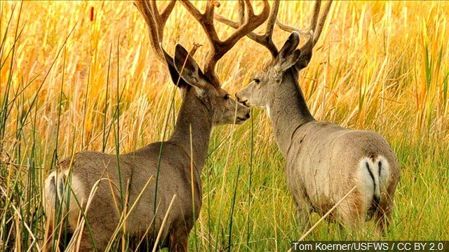 Wyoming hunting licenses to reflect recent harsh winter