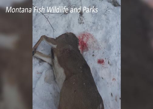 Montana Fish Wildlife and Parks