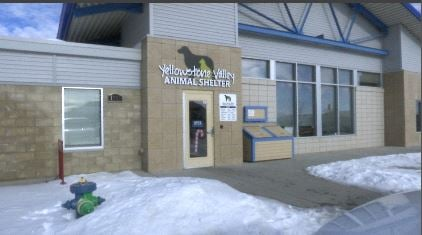 Yellowstone Valley Animal Shelter of Billings