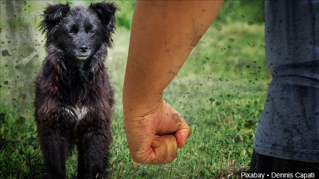 House committee OKs bill increasing penalty for hurting pets