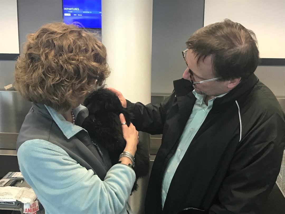 Robyn and Bob Cummings welcome a male poodle, Simon, to the family