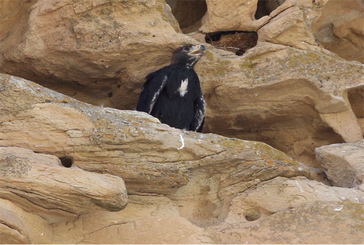 Energy foundation helping fund new eagle exhibit in Cody