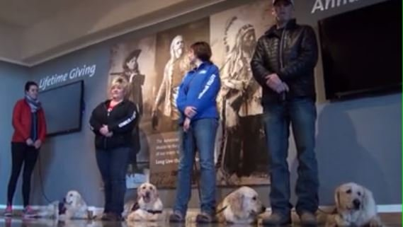 Group of dogs train to save veterans lives