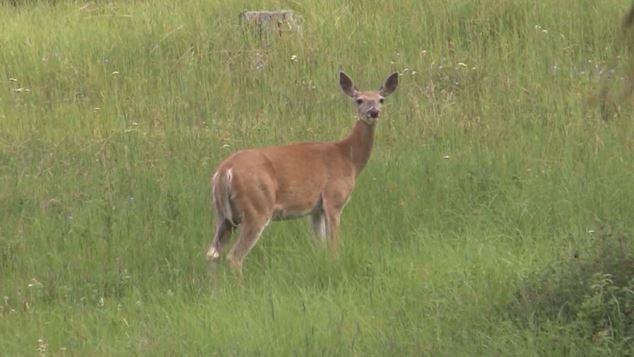 More than 100 deer taken in first weekend of CWD hunt