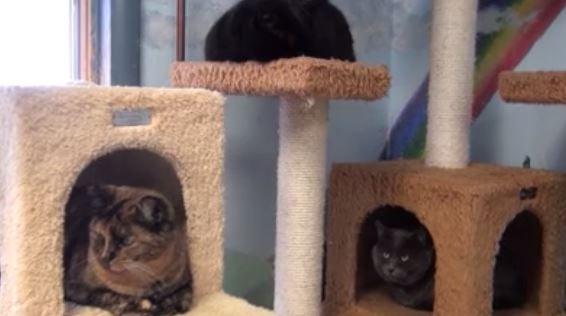 News KULRcom News Weather Sports In Billings Montana - 29 cats lost way life