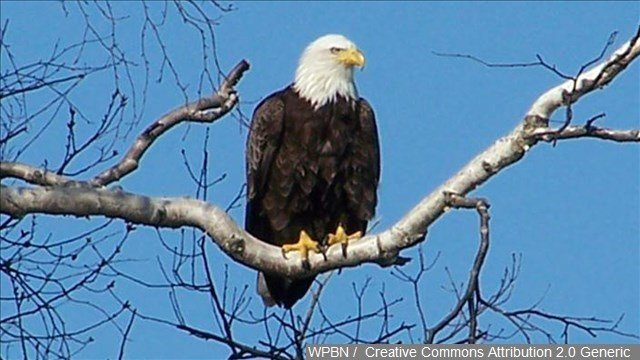 Canadian brothers rescue bald eagle, win the Internet - ABC FOX ...
